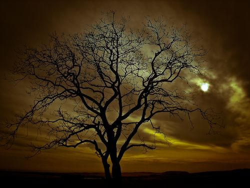 Sad_tree_by_safuanstyx-d3b0zw5